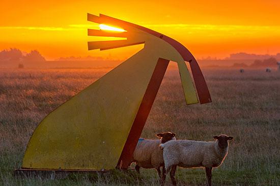 Schafe und Kunst am Speicherkoog